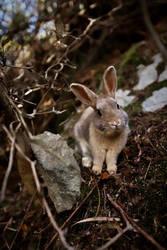 Baby Bunny, Okunoshima
