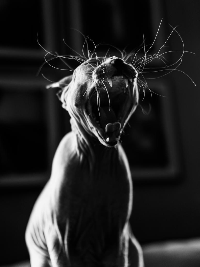 Yawning by bliXX-a