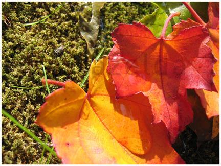 Welcome Autumn by Kaylazelda