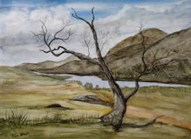 Barren Tree by Bigsteel