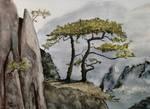 Mountain Pines
