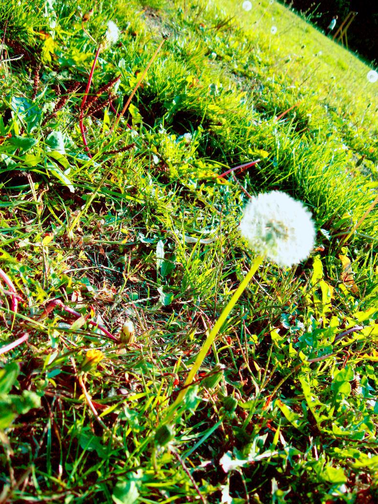 Field of dandelions by HuffleMuffin