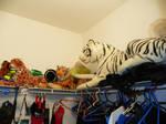 My Room~