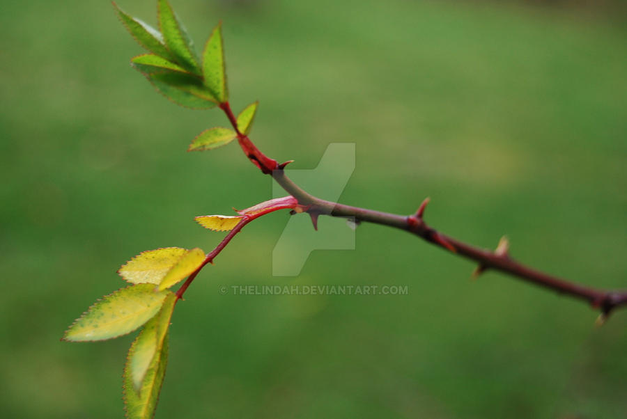 Leaves and thorns by theLindah