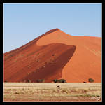 Namib beauties