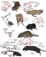 practise  on rats by SweGizmo