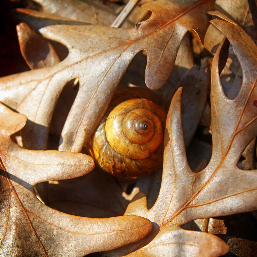 swirl by hexagonian