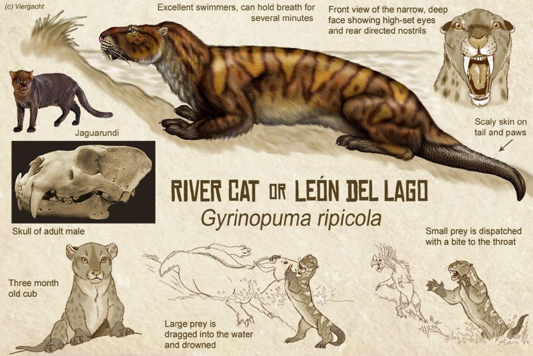 River Cat Or Leon Del Lago By Viergacht On Deviantart