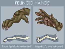 Felinoid hands