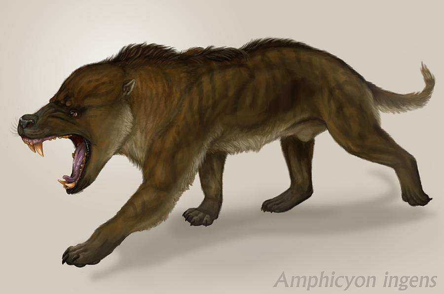 نتيجة بحث الصور عن Amphicyon .