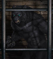 Werewolf Wednesday 1-30-13 by Viergacht