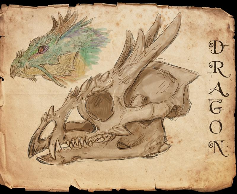 Dragon skull by Viergacht