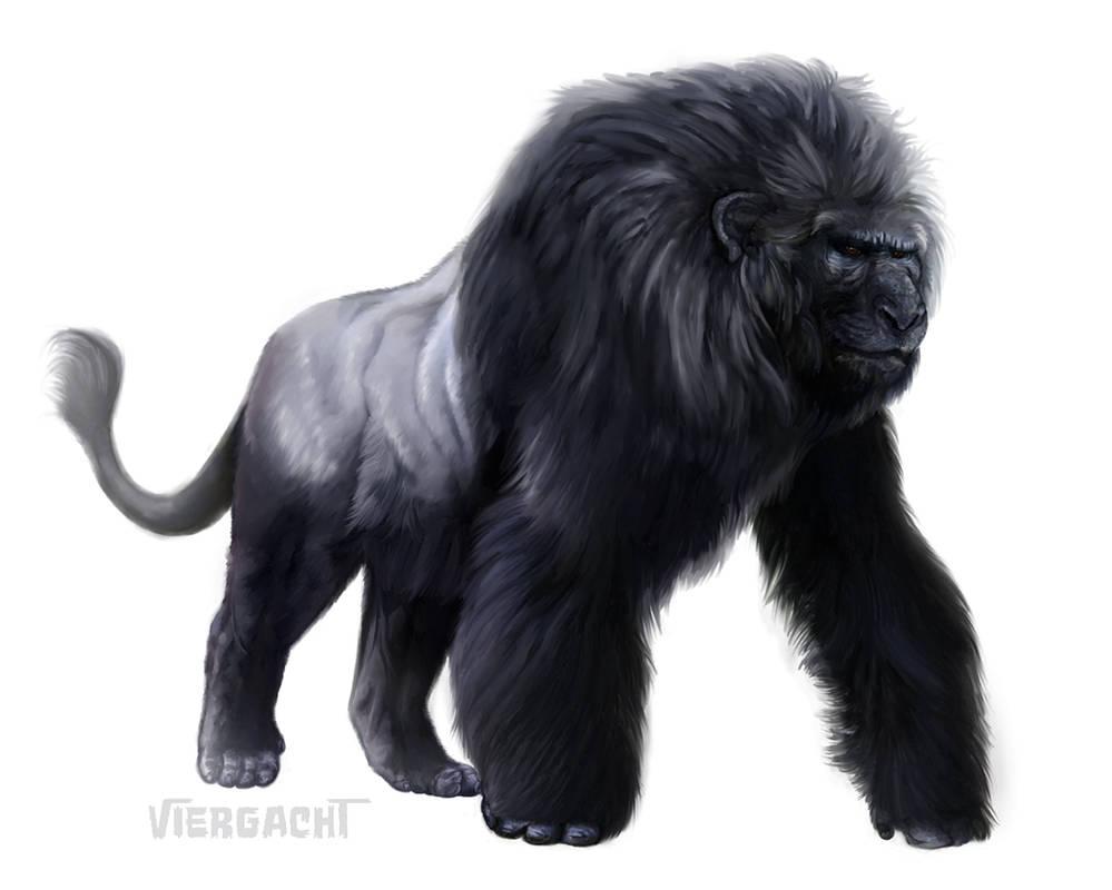 Gorilleo by Viergacht