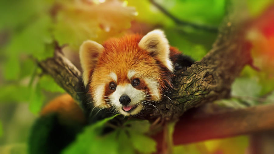 Red Panda by Mackaged