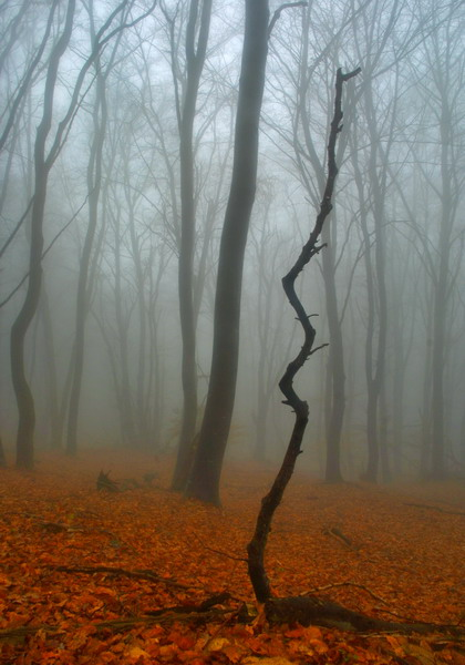 old forest by uros2006
