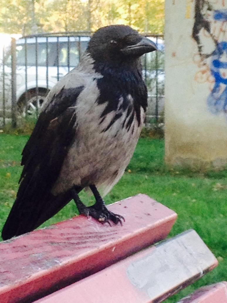 Bird of seduction by Sol4rpleXus