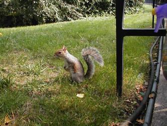 Political Squirrel by Kayru