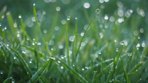 Morning Dew on Grass - Landscape by slysnakesamhardy