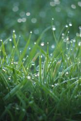 Morning Dew on Grass - Portrait by slysnakesamhardy