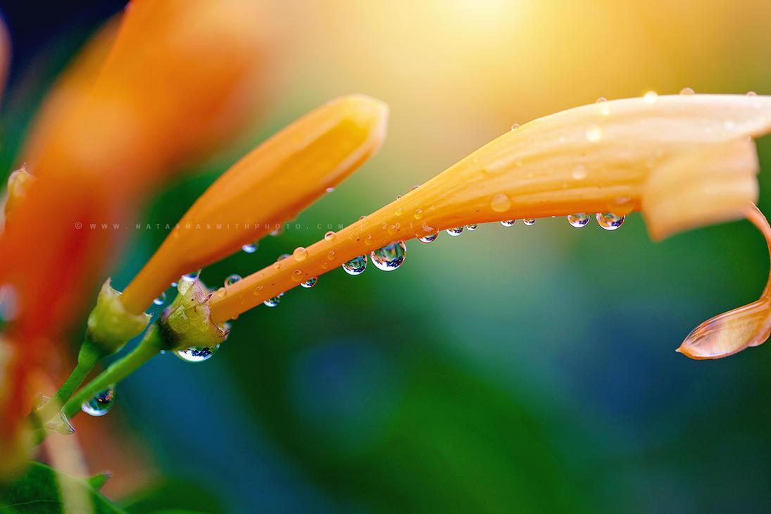Raindrops by NatashaSmithPhoto