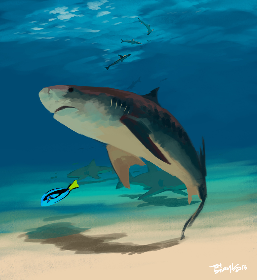 Tiger Shark by tohdraws