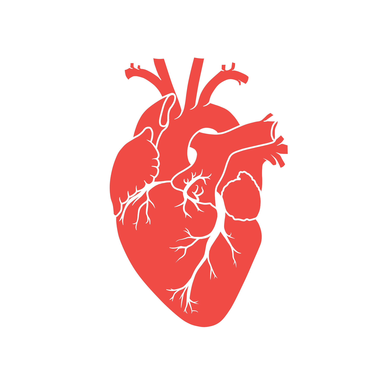 minimalistic heart pirates one - photo #13