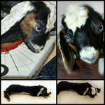 Small Baby Kid Goat Soft Mount Taxidermy FOR SALE by LoveBizarreOddities
