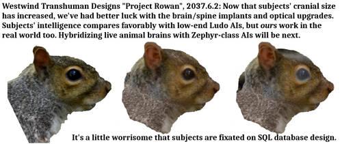 Squirrel Upgrade Program by KSchnee