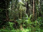 Rainforest 7