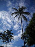 Palm Silhouettes 2