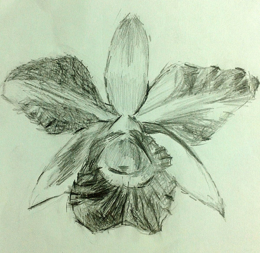 Orchids ~ pencil sketch by MuArtGL on DeviantArt  Orchids ~ penci...