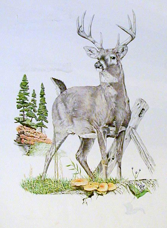 Buck by BeckyLiv