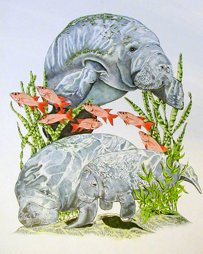 Manatees by BeckyLiv