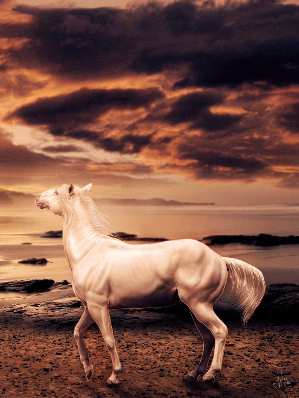 ^ Twilightstars ^ horses Cape_Cod_Kwassa_Kwassa_by_Rimfy