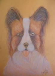 Pet portrait by PandoraV
