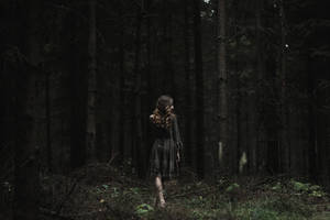 silent woods by collien