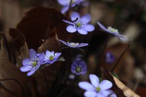 violet spring by collien