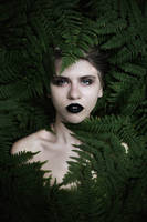ipomoea by collien