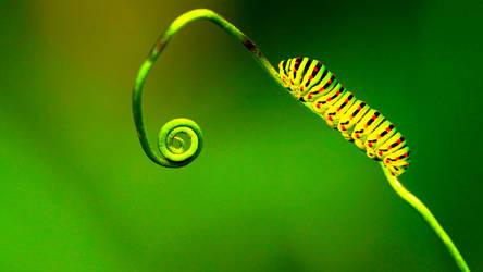 Caterpillar by DPCloud01