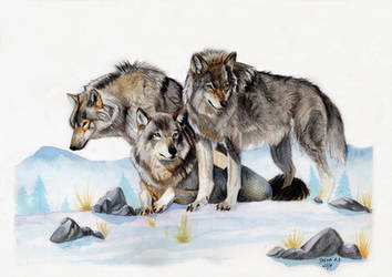 Wolf family by Thanda
