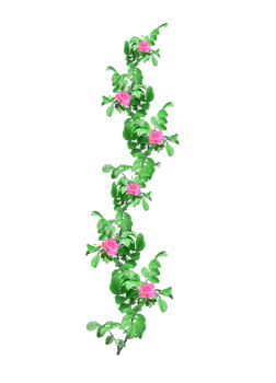 rose garland  1 PNG stock