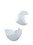 egg shell PNG