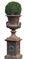 box tree in the urn PNG by Amalus