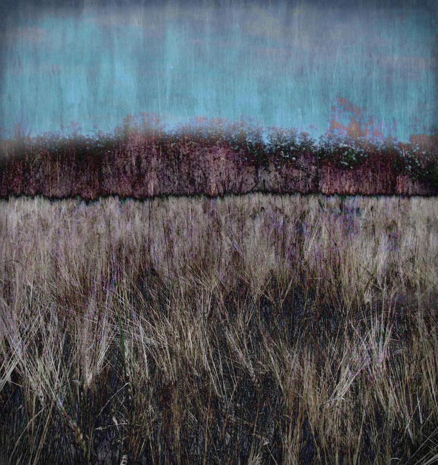 barley by Amalus