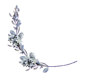 hyacinths with a laurel branch png