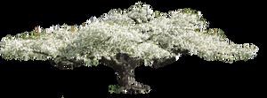 flowering tree by Amalus