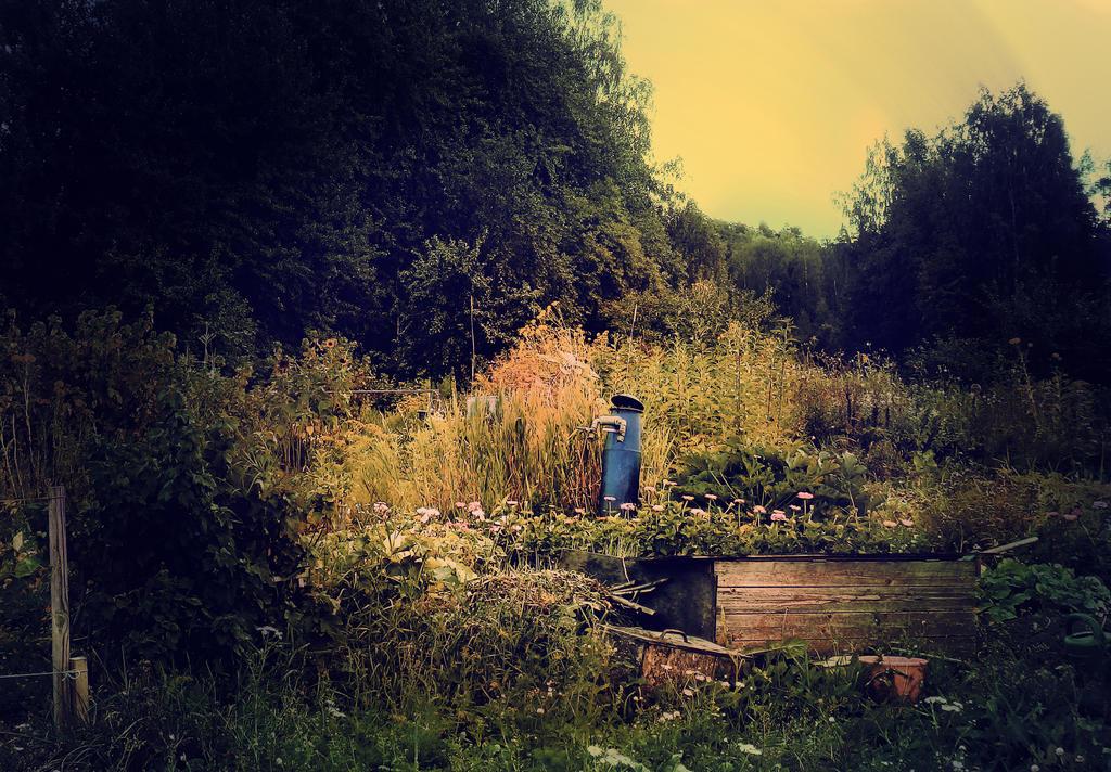 Garden by Amalus
