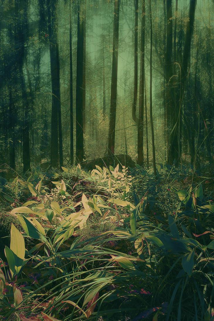 Woodland by Amalus
