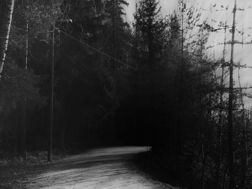 a road on the edge of the forest by Amalus