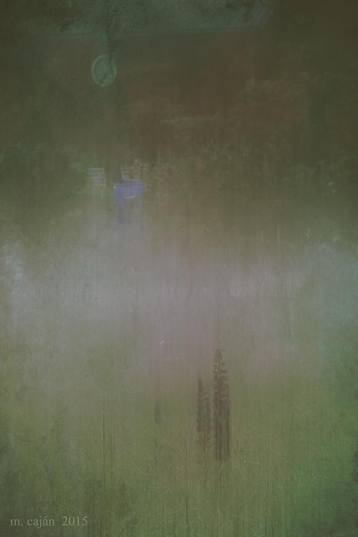 Misty Garden by Amalus